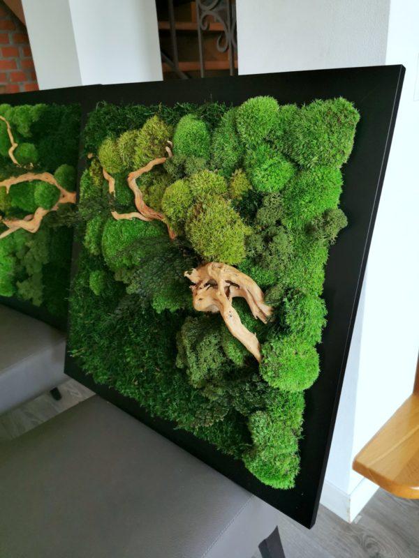 Obraz z mchu stabilizowanego kwadrat typu Forest