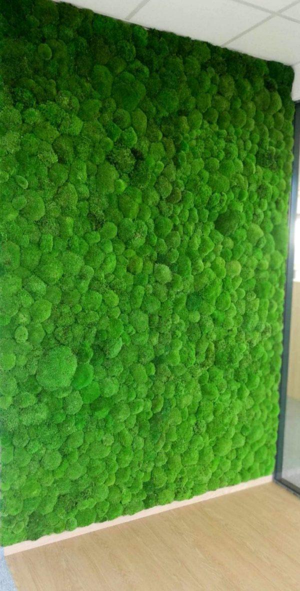 Ściana z mchu poduszkowego