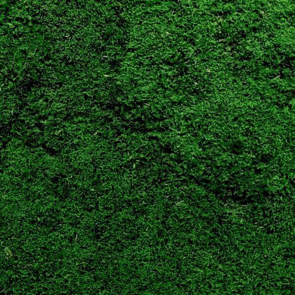 Ściana z mchu płaskiaego